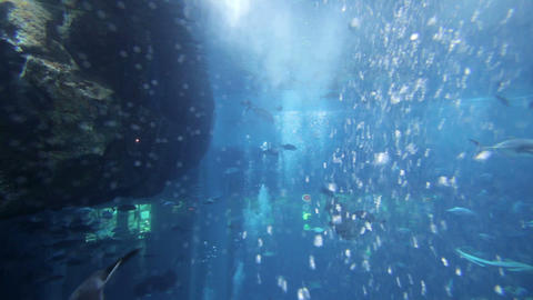 aquarium dubai mall Stock Video Footage