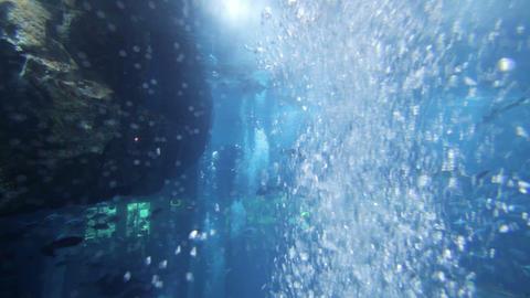 aquarium dubai mall Footage