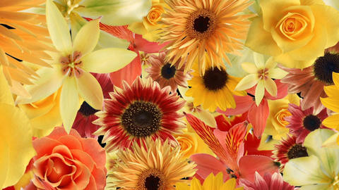 Flower78234678 Stock Video Footage