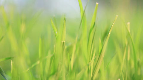 Green grass. Wind Stock Video Footage