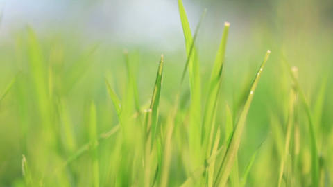 Green grass. Wind Stock Video Footage
