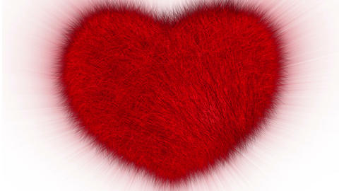 Furry Heart Stock Video Footage
