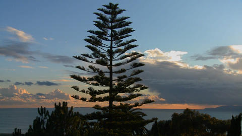 Gorgeous clouds behind a Norfolk pine and the ocea Footage