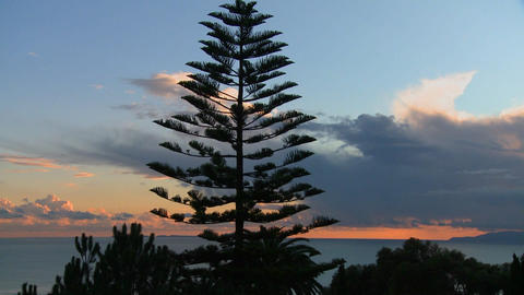 Gorgeous clouds behind a Norfolk pine and the ocea Stock Video Footage