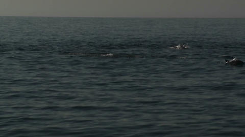 A pod of dolphins play in the water alongside a bo Footage