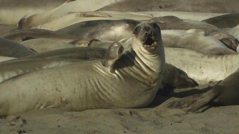 Sea lions nestle on a beach Stock Video Footage