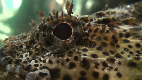 Close up of a fish eye underwater Stock Video Footage