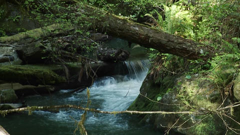 A pretty stream flows through a rainforest Stock Video Footage