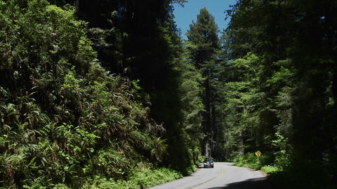 Cars drive on a road through the Redwood forests o Footage