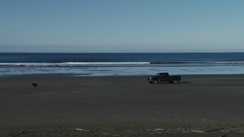 A truck drives across a beach with a dog running i Stock Video Footage