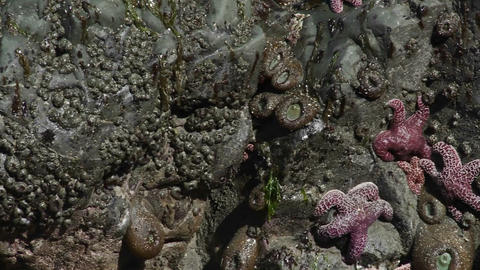 Starfish in tide pools along the California or Ore Stock Video Footage