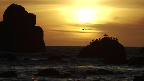 Seagulls perch on a rock at sunset along the Orego Stock Video Footage
