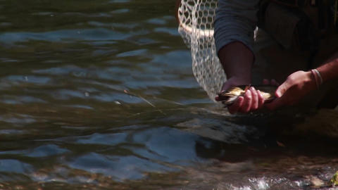 A fisherman practices catch and release Footage