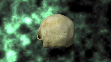 Actual Human Skull, 3D Scan, rotating on BG 30P Animation