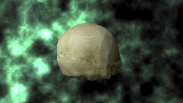 Actual Human Skull, 3D Scan, rotating on BG 30P Stock Video Footage
