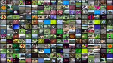 Video Wall Element 18x13 30P Animation
