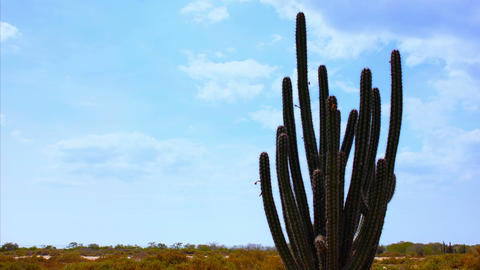 Cactus Timelapse 01 Stock Video Footage