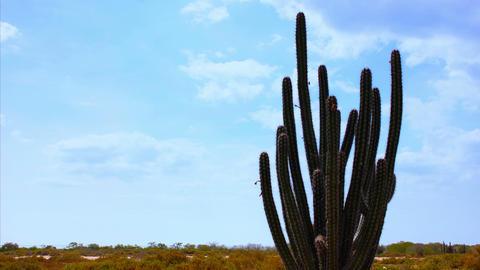 Cactus Timelapse 01 Footage