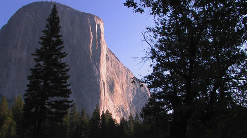 Trees stand at the edge of the El Capitan rock for Stock Video Footage