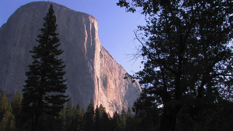 Trees stand at the edge of the El Capitan rock for Footage