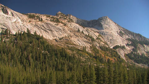Trees stand at the edge of a mountain at Tuolumne  Footage