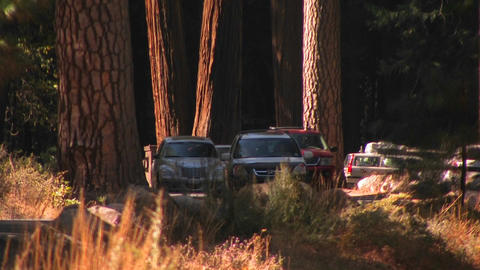 A line of cars drive through a forest landscape in Stock Video Footage