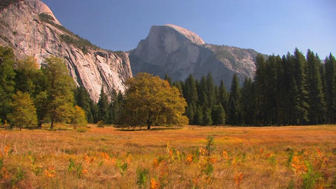 Trees stand at the edge of a mountain meadow in Yo Stock Video Footage