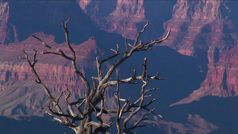 A dry and bare tree overlooks a valley of mesas in Stock Video Footage