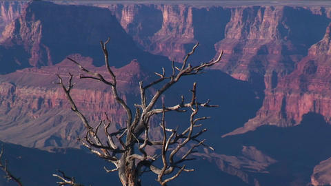 A dry and bare tree overlooks a valley of mesas in Footage