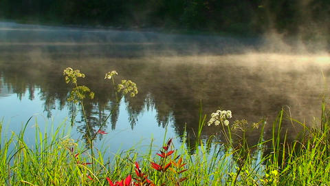 Steam rises from Trillium Lake behind grass and pl Stock Video Footage
