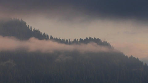 Clouds cover pine trees, mountains and forests Footage