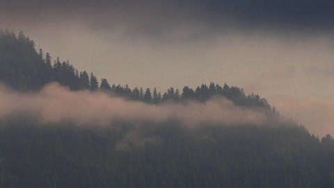 Clouds cover pine trees, mountains and forests Stock Video Footage