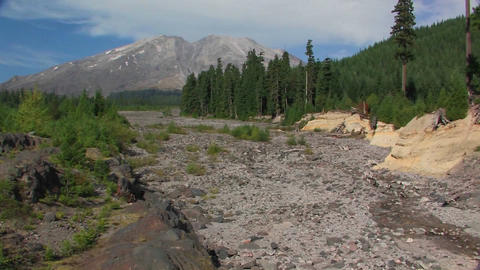 A dry riverbed cuts through a pine forest at Mt. S Footage