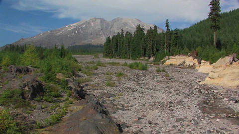 A dry riverbed cuts through a pine forest at Mt. S Stock Video Footage