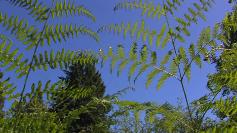 Fern branches at day Stock Video Footage