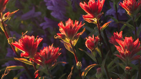 Multi-colored flowers move in a breeze at day Stock Video Footage