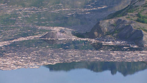 Splinters of wood float in a lake at Mt. St. Helen Footage