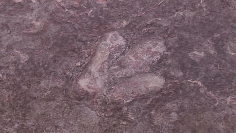 A brown rock with textured indentions in Glen Cany Stock Video Footage