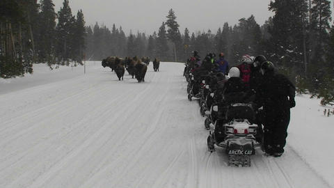 Snowmobiles park along a road in Yellowstone Natio Footage