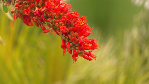 Red flowers move in a breeze at day Stock Video Footage