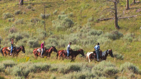 Horses and riders take a pack trip through the wil Footage