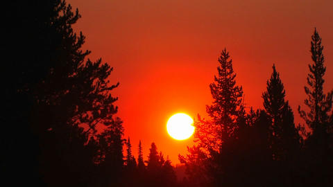 Sunset behind a pine forest Stock Video Footage