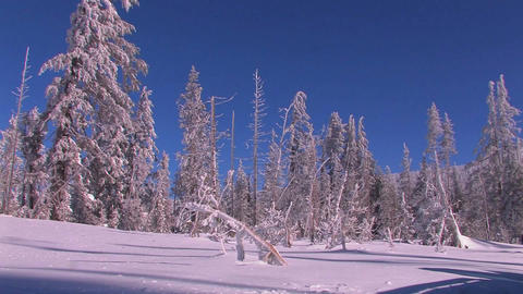 Pan across a snowscape with winter trees covered i Stock Video Footage