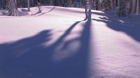 Tilt up from a tree casting a shadow into the sun Stock Video Footage