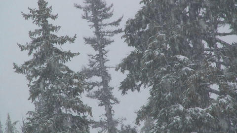Heavy snow falls in a forest Stock Video Footage