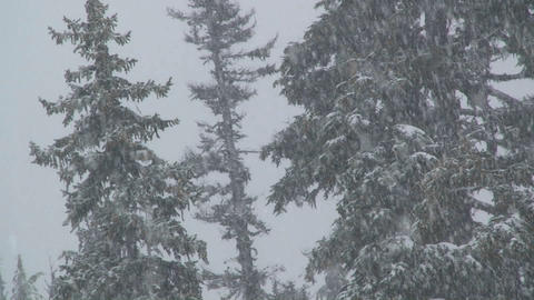 Heavy snow falls in a forest Footage