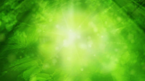 Green Nature Loop Stock Video Footage