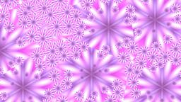 Pink flowers in mirror splinters Stock Video Footage