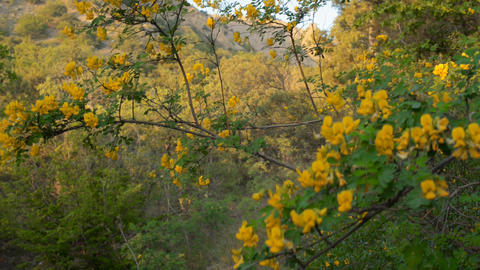Wild flowers in the mountains Stock Video Footage