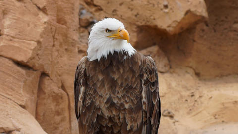 American Eagle Footage